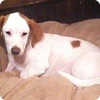 Adopt A Pet :: Sawyer - Crowley, LA
