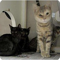 Adopt A Pet :: Lilly - Mobile, AL