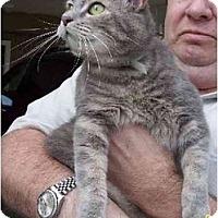 Adopt A Pet :: Lila - Summerville, SC