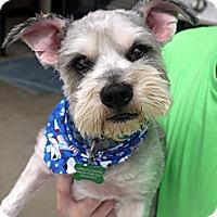 Adopt A Pet :: Popeye - Baton Rouge, LA