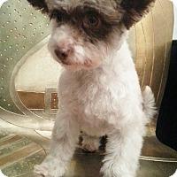 Adopt A Pet :: Fee-Adoption pending - Bridgeton, MO