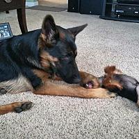 Adopt A Pet :: Barend - Woodinville, WA