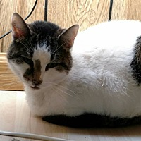 Adopt A Pet :: Kelly - Hanna City, IL