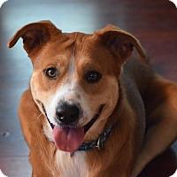 Mixed Breed (Medium) Mix Dog for adoption in Kingwood, Texas - Pumpkin