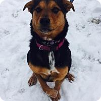 Adopt A Pet :: Indy - Mt. Pleasant, MI