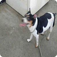 Adopt A Pet :: CHESTER - San Martin, CA