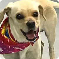 Adopt A Pet :: Lucky - Casa Grande, AZ