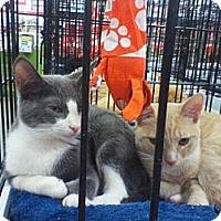 Adopt A Pet :: Keiley - Harrisburg, NC