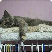 Adopt A Pet :: Iris - Jenkintown, PA