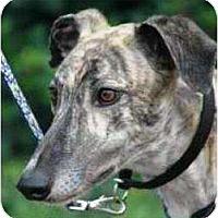 Adopt A Pet :: Bongo - Orange County, CA