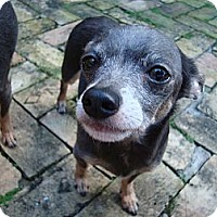 Adopt A Pet :: Dino - Fort Lauderdale, FL