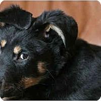 Adopt A Pet :: Lana - Rigaud, QC