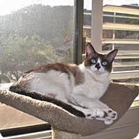 Adopt A Pet :: Posey - Davis, CA