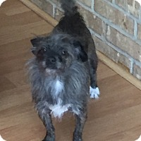 Adopt A Pet :: Custer - Dallas, TX