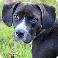 Adopt A Pet :: Chuckles - Bedford, VA