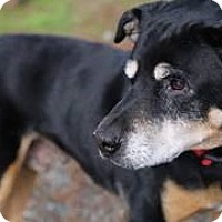 Adopt A Pet :: Rocky - Petaluma, CA