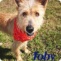 Adopt A Pet :: Toby - Converse, TX