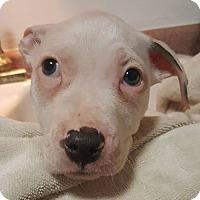 Adopt A Pet :: Jack - Savannah, GA