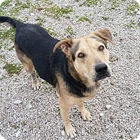 Adopt A Pet :: GRACIE - Port Clinton, OH