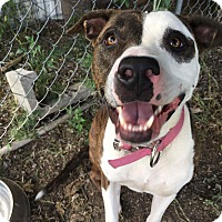 Adopt A Pet :: Rosie - Weatherford, TX
