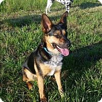 Adopt A Pet :: Johnnie Walker - Thomasville, NC