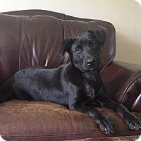 Adopt A Pet :: Gretel - Southington, CT