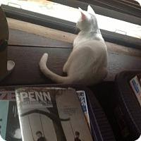 Adopt A Pet :: Octavia - Chicago, IL