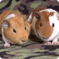 Adopt A Pet :: Garbador - Steger, IL