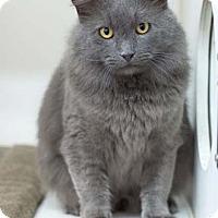 Adopt A Pet :: Church - Merrifield, VA