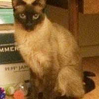 Adopt A Pet :: Sara3 - North Highlands, CA