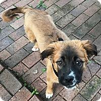 Adopt A Pet :: Carmen - Columbus, OH