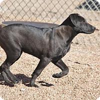 Adopt A Pet :: Beast - Jewett City, CT