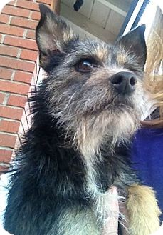 Terrier (Unknown Type, Small) Mix Dog for adoption in Salt Lake City, Utah - SOPHIA