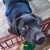 Adopt A Pet :: Buna Bear - Minnetonka, MN