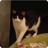 Adopt A Pet :: Stevie--PETSMART - Muncie, IN