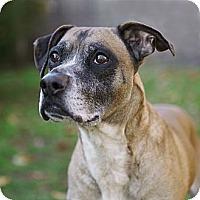 Adopt A Pet :: Mitch - Rockaway, NJ