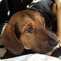 Adopt A Pet :: Lodi - ADOPTED!! - Antioch, IL