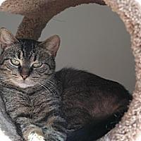 Adopt A Pet :: Meow-Na-Lisa - Wyandotte, MI