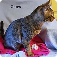 Adopt A Pet :: Oates - Bentonville, AR