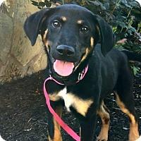 Adopt A Pet :: Diego - Austin, TX