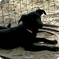 Adopt A Pet :: CeeCee - Danbury, CT