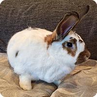 Adopt A Pet :: Gus - Grand Rapids, MI