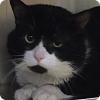 """Adopt A Pet :: Checkers-""""Come visit me""""! - Manchester, NH"""
