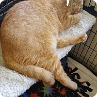 Adopt A Pet :: Ted - Middletown, NY