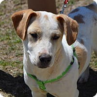 Adopt A Pet :: Hannah - CRANSTON, RI