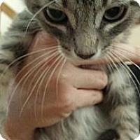 Adopt A Pet :: Trio - San Diego, CA