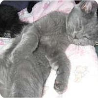 Adopt A Pet :: Bella&Stella - Clay, NY