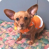 Adopt A Pet :: Penny - Osseo, MN