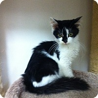 Adopt A Pet :: Nigel - Trevose, PA