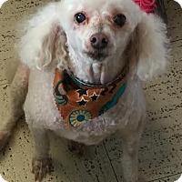 Adopt A Pet :: Whitey - Acushnet, MA